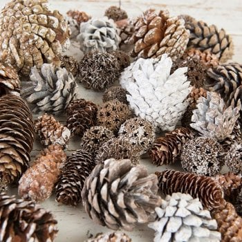 The Hobby House Woodland Cones Winter Selection